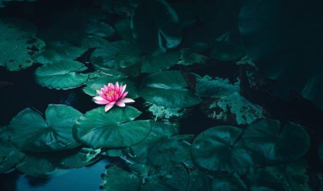 align-chakras-meditation